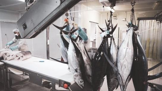 Pêcheur, un métier de passion